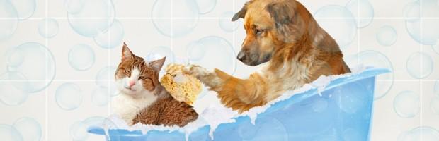 Banho e Tosa Pet Shop Regis - EM Sabará